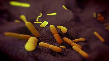 الطاعون الدبلي   ..  الطاعون الرئوي   ..وباء جديد من الصين اخطر من فيروس  كورونا  ..تعرف على الأنواع والأعراض وطرق الوقاية