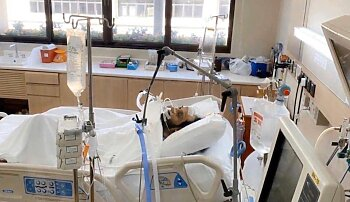 بين الحياة والموت | تفاصيل خطيرة في الحالة الصحية لتركي آل الشيخ .. ورسالة من حارس الزمالك
